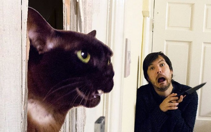 Guy Recreates Famous Movie Scenes With His Cats, And The Results Are Downright Hilarious