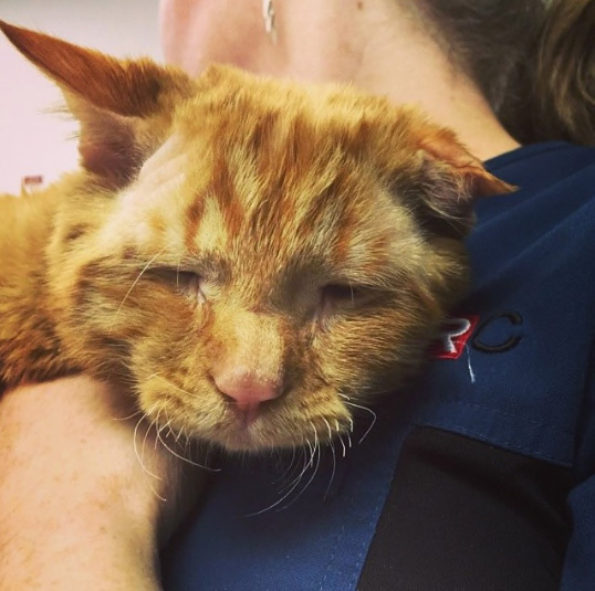 'Saddest Cat' In The World Was Scheduled To Be Put Down, But A Loving Couple Adopted Him And He Transformed In Just One Hour