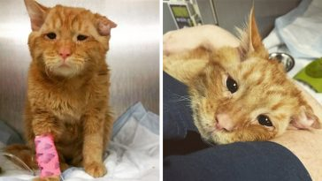 saddest-cat-in-the-world-was-scheduled-to-be-put-down-but-a-loving-couple-adopted-him-and-he-transformed-in-just-one-hour