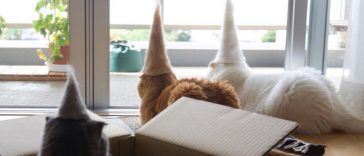 12-hilarious-photos-cats-wearing-hats-made-hair