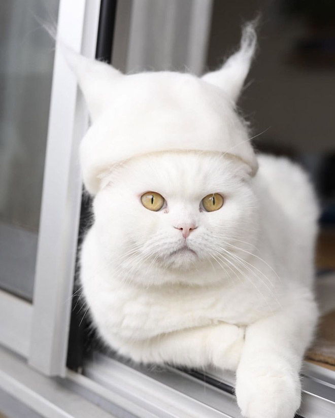 12 Hilarious Photos Of Cats Wearing Hats Made From Their Own Hair