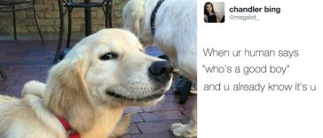 16-hilarious-tweets-dogs