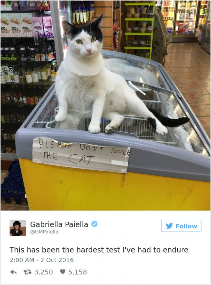 Of The Funniest Cat Tweets Of Page Of - 16 funniest cat tweets 2016