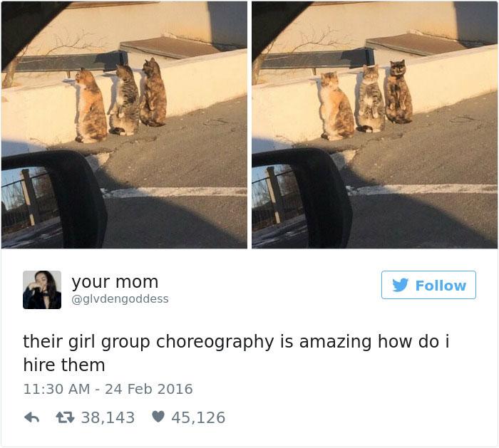 Of The Funniest Cat Tweets Of - 16 funniest cat tweets 2016
