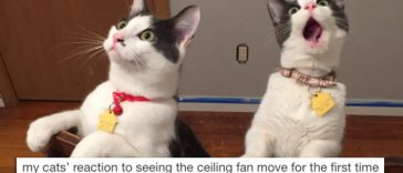 18-hilarious-pictures-proving-cats-just-perfect-creatures