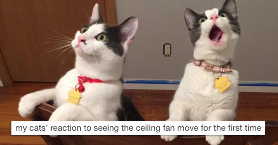 Hilarious Twitter Jokes That Will Make Your Day I Laughed So - 24 hilarious twitter jokes