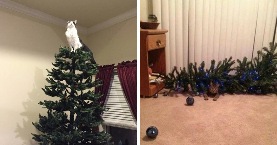 24 cats who are so happy your christmas tree is finally Christmas tree cat tower