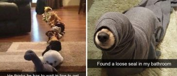 24-hilarious-dog-snapchats-that-will-make-your-day-so-much-better