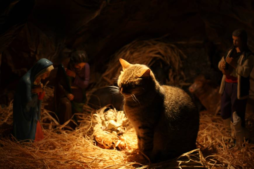 24 Times Cats Crashed Nativity Scenes