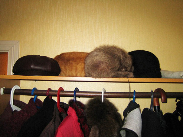 27 Cats Who Are Mastering The Art Of Hide And Seek. Can You Find All Of Them?