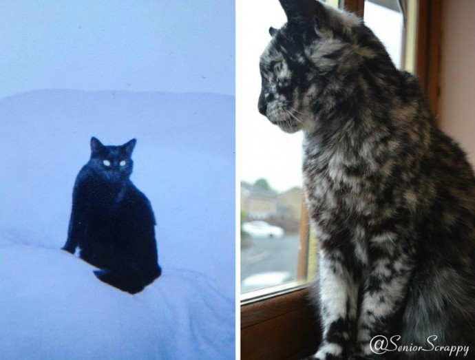 Meet Scrappy The YearOld Black Cat Who Grew A Unique Marble - Meet scrappy 19 year old black cat grew unique marble fur due rare skin condition