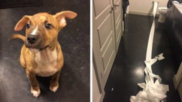 the-internet-is-falling-in-love-with-this-dog-who-tried-to-clean-his-own-pee-with-toilet-paper