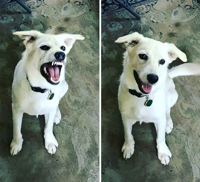 Adorable Photos Of Animals Before And After Being Called A Good Boy - 27 amazing transformations of dogs and cats before after adoption