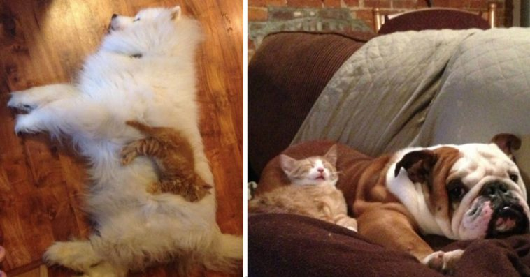 Funny Photos Of Cats Sleeping On Their Dog Friends Page Of - 20 hilarious cat photobombs