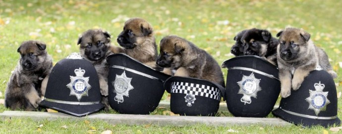 22 Adorable Police Puppies Trying To Look Tough But