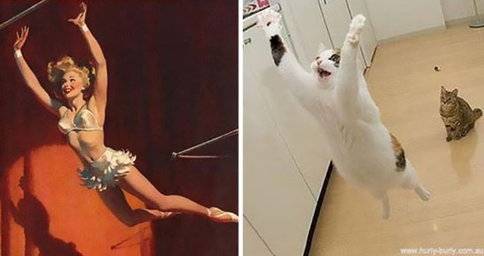 Hilarious Photos Of Cats Posing Like PinUp Girls Page Of - 24 hilarious photos cats posing like pin girls