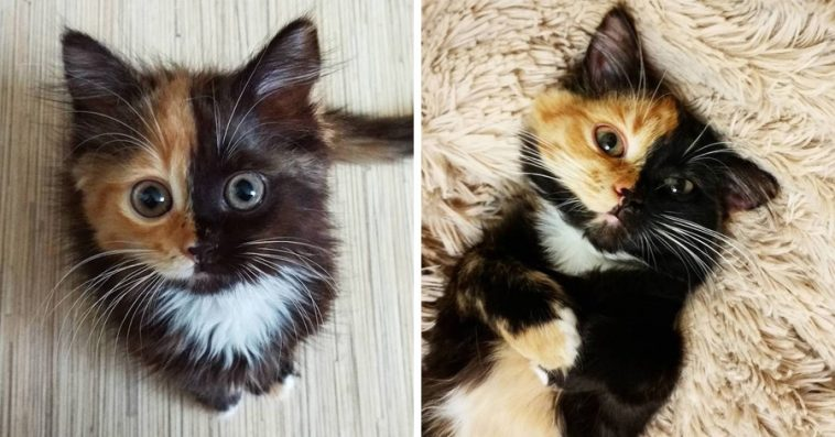 Meet Yana The Adorable TwoFaced Cat The Internet Has Fallen In - This is bone bone the big fluffy cat from thailand the internet is falling in love with