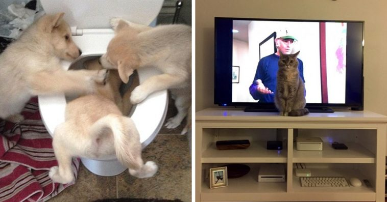 Times Animals Were The Biggest Adorable Jerks Ever - 32 animals complete jerks