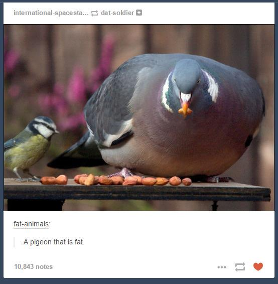 Tumblr Posts About Animals That Are Impossible Not To Laugh At - 45 tumblr posts about animals that are impossible not to laugh at
