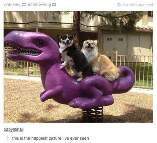 Tumblr Posts About Animals That Are Impossible Not To Laugh At - 24 tumblr posts about dogs that are impossible not to laugh at