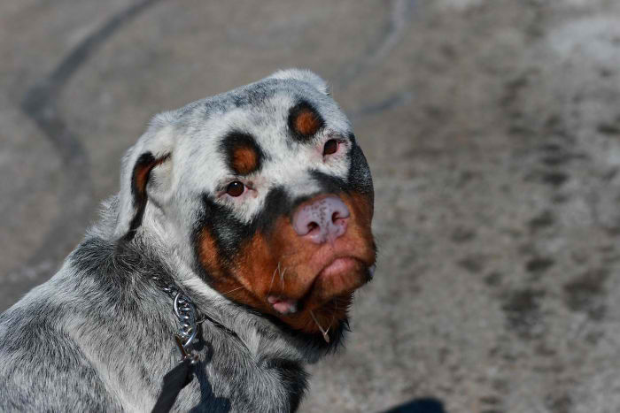 24 unique animals with vitiligo who look like they re running out of ink