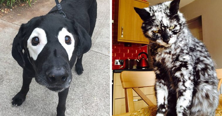 24 Unique Animals With Vitiligo Who Look Like They Re