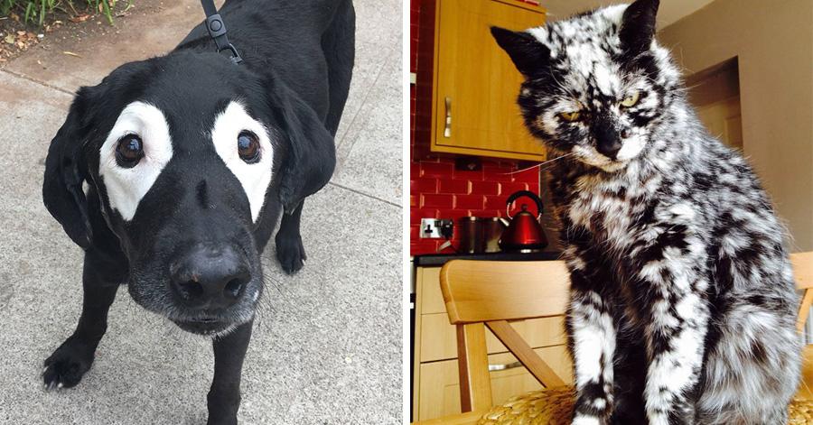 24 Unique Animals With Vitiligo Who Look Like They Re