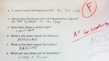 Cow funny essay answers