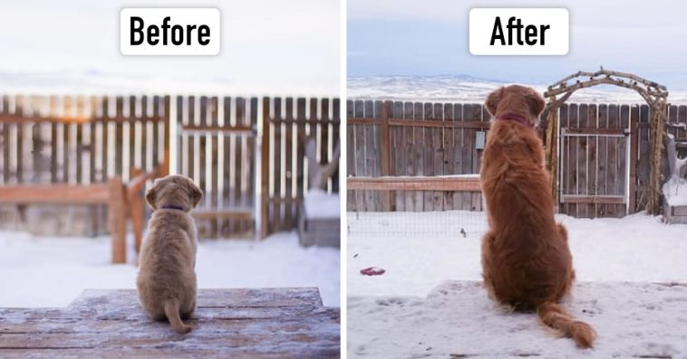 18 Before After Pictures Of Grown Up Puppies That Will Make You