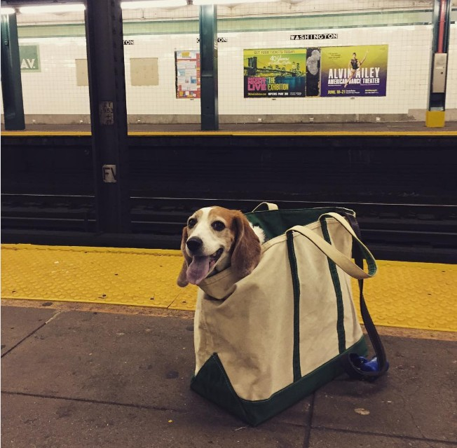 NYC Subway Bans Dogs Unless They Fit Into A Bag And New Yorkers - Nyc subway bans dogs unless fit bag new yorkers reacted