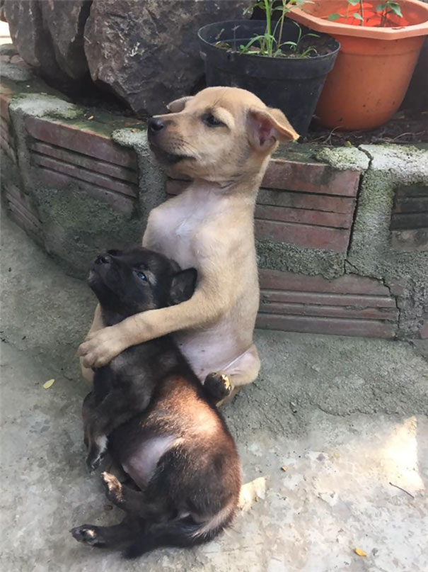 These Two Stray Puppies Were Just Rescued And They Refuse To Stop - These two stray puppies were just rescued and they refuse to stop hugging each other