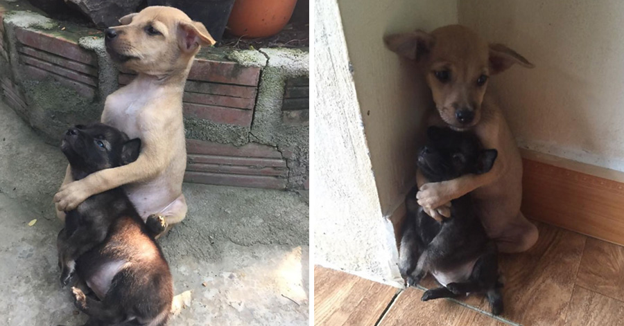These Two Stray Puppies Were Just Rescued, And They Refuse To Stop Hugging Each Other