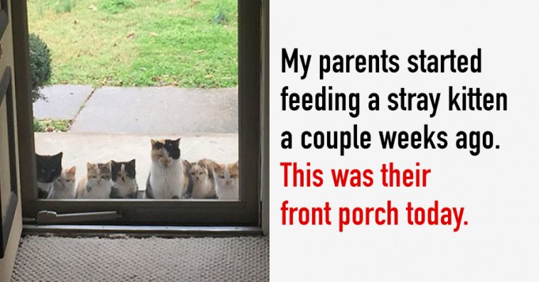 """20 Of The Funniest """"I Don't Own A Cat"""" Moments That Ever Happened To People"""