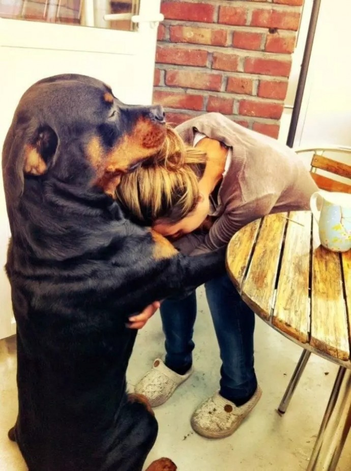 Reasons Why You Should Be Thankful To Have A Dog - 20 reasons why you should be thankful to have a dog