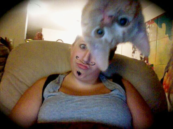 Of The Most Hilarious Cat Photobombs Ever Happened Page Of - 20 hilarious cat photobombs