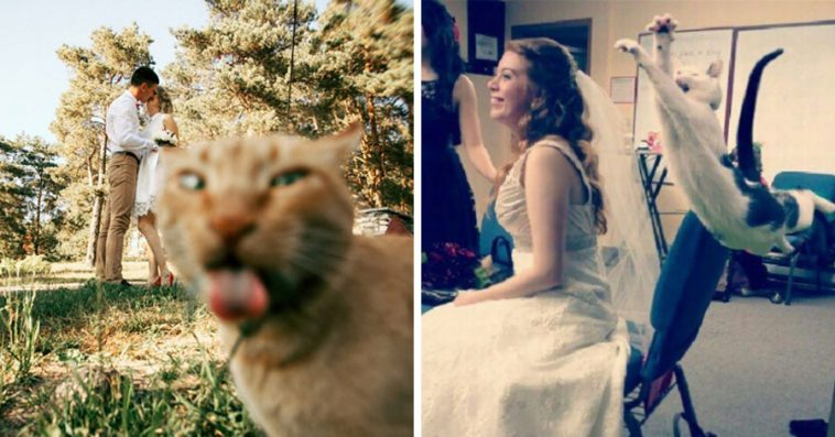 Of The Most Hilarious Cat Photobombs Ever Happened - 20 hilarious cat photobombs