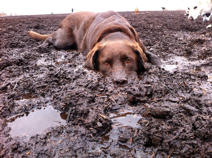 Times Letting Your Dog Play In The Mud Wasnt The Best Idea - 28 times letting your dog play in the mud wasnt a good idea