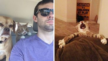 the 37 funniest photos of cats sleeping in the most