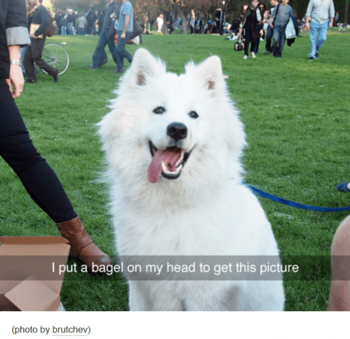 Hilarious Tumblr Posts About Animals That Will Make Your Day So - 45 tumblr posts about animals that are impossible not to laugh at