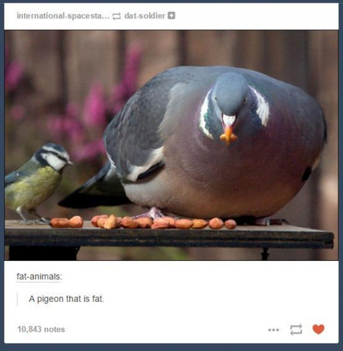 32 Hilarious Tumblr Posts About Animals That Will Make Your Day So