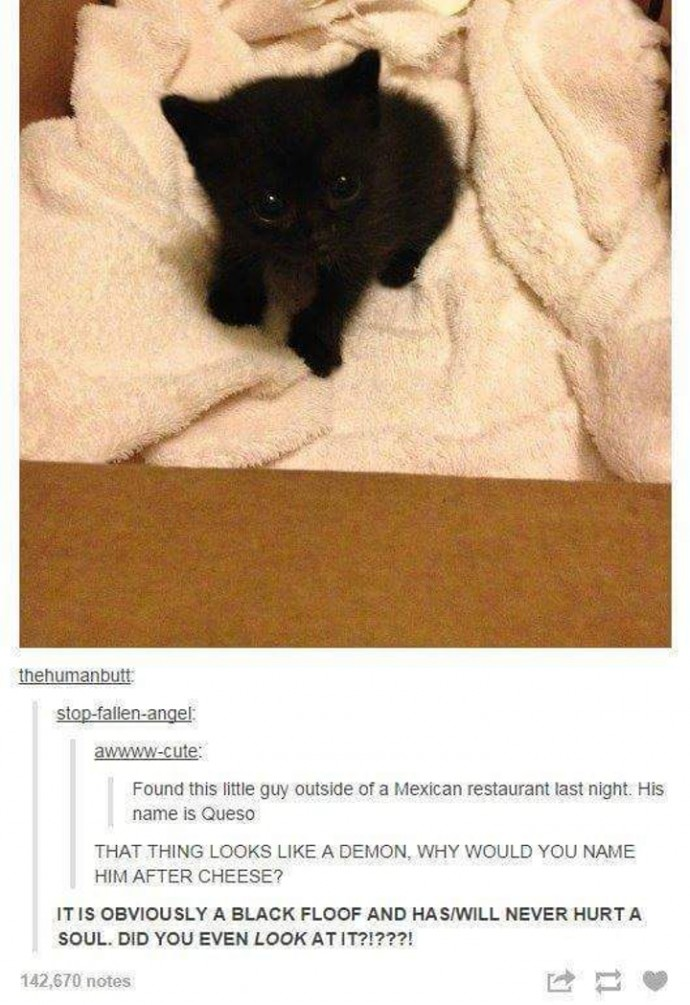 Hilarious Tumblr Posts About Animals That Will Make Your Day So - 32 hilarious tumblr posts about animals that will make your day so much better