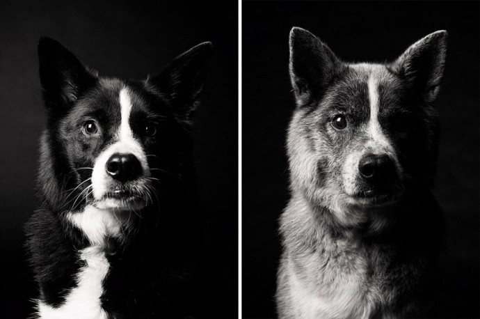 Before After Adorable Photo Series Shows Dogs Growing From - 27 amazing transformations of dogs and cats before after adoption