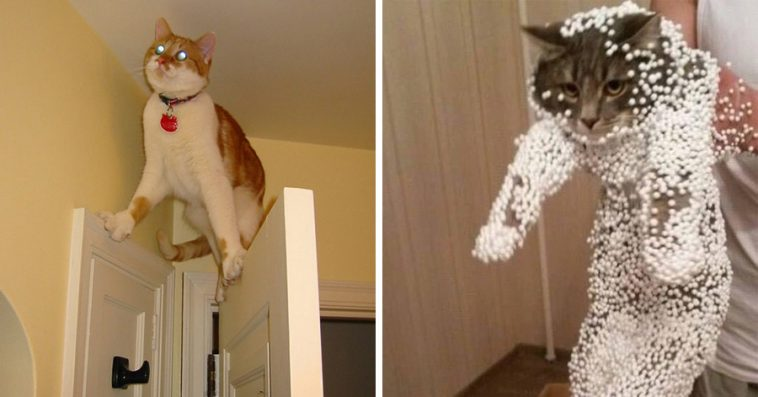 Cats Who Tried So Hard But Failed In The Most Hilarious Ways - Cats who tried so hard but failed in the most hilarious ways
