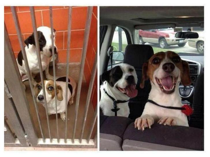 Amazing Transformations Of Dogs And Cats Before After Adoption - 27 amazing transformations of dogs and cats before after adoption