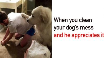 Perfectly Timed Dog Pictures That Are Impossible Not To Laugh At - 32 hilarious tumblr posts about animals that will make your day so much better