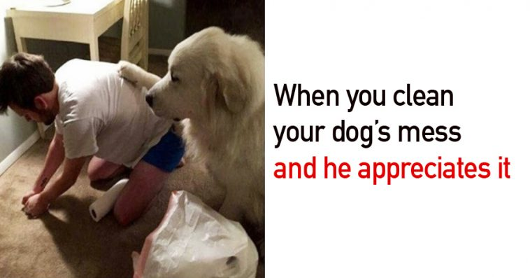 15 Hilarious Dog Memes That Will Make Your Day So Much Better