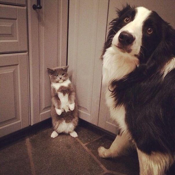 Hilarious Times Animals Were Caught RedHanded Page Of - 23 hilarious photos of pets caught red handed