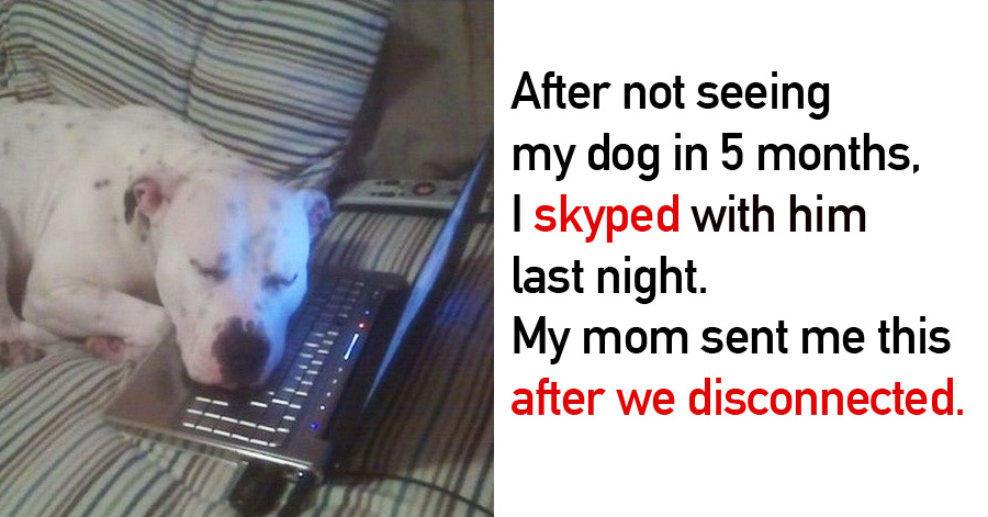 20 Photos Proving That Dogs Are Too Much For This World