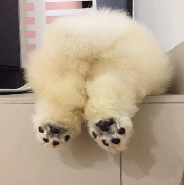 Little White Fluffy Dog Breeds