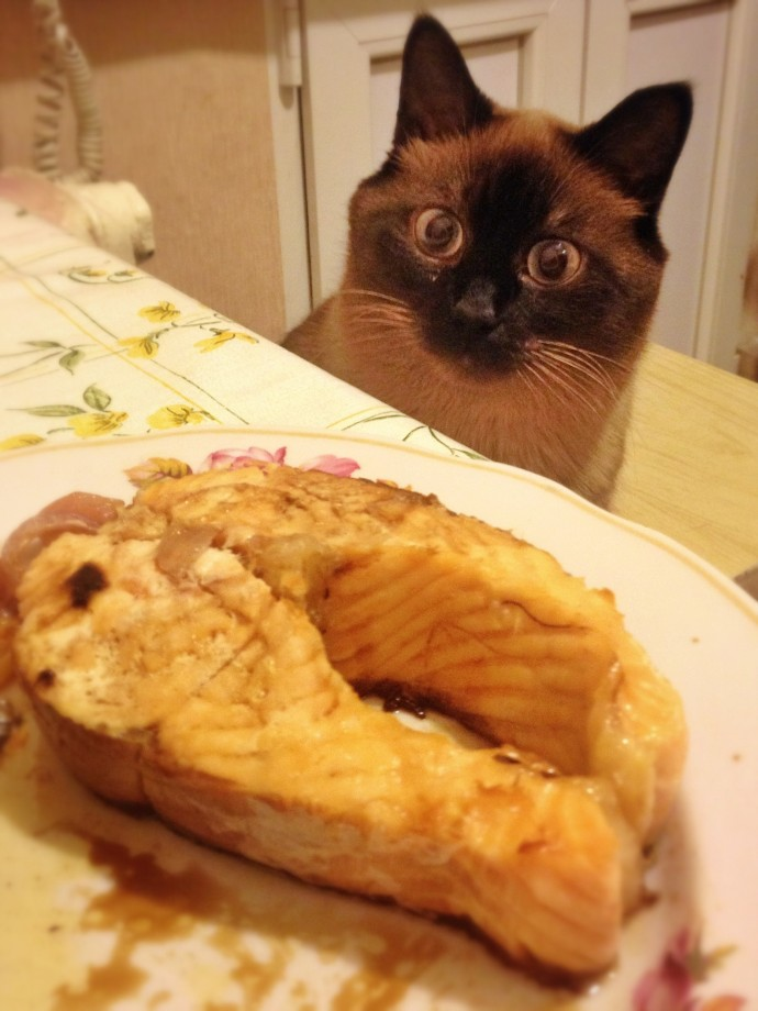 Hilarious Animals Whod Do Anything For Your Food Page Of - 15 hilarious animals whod do anything for your food